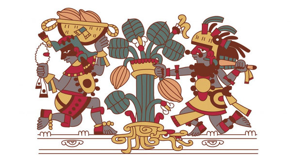 Aztecs picking cocoa fruit from a cocoa tree