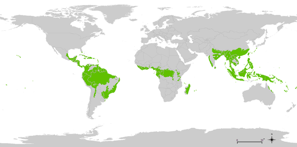 Rainforest Facts - World Map