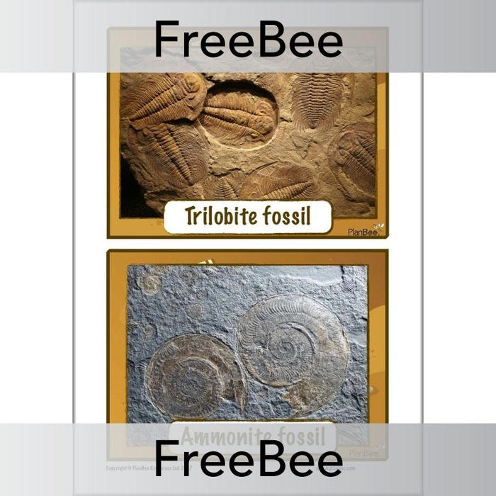 Fossil Picture Cards