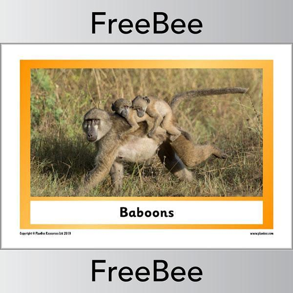 PlanBee African Animals KS1 Display Posters