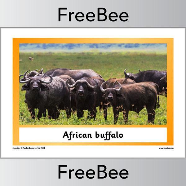 African Animals KS1 Display Poster