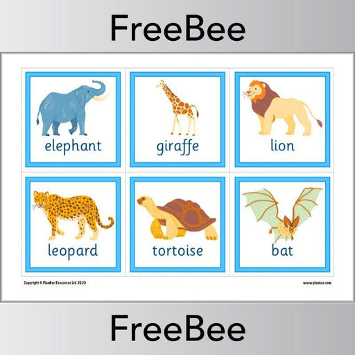 PlanBee Animal Flashcards | Free Teaching Resources | PlanBee