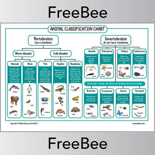 PlanBee Animal Classification Chart | vertebrates and invertebrates KS2