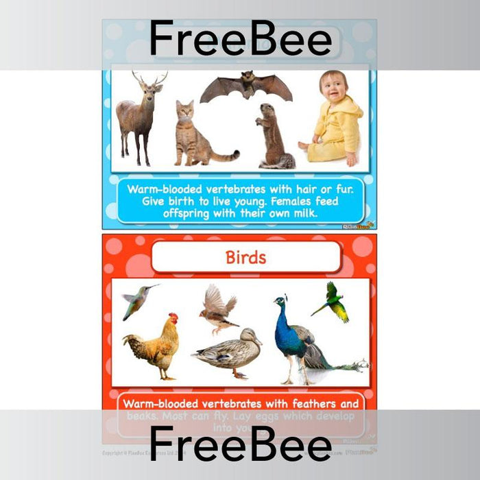 PlanBee FREE Classifying Animals Display Cards by PlanBee