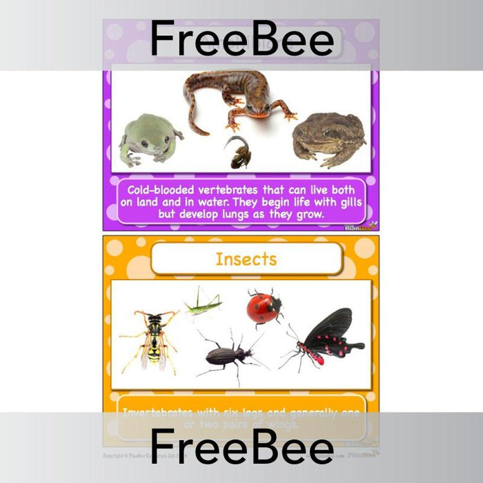 Classifying Animals Display Cards