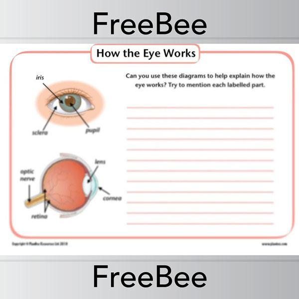 PlanBee How the eye works KS2