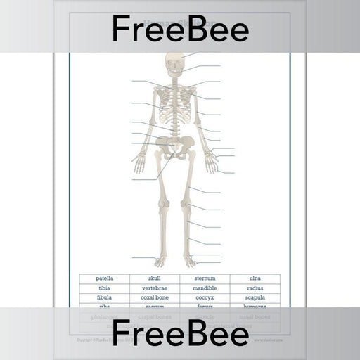 lable-the-skeleton-worksheet-blank