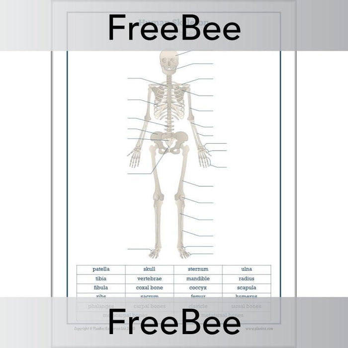 PlanBee Free label the Skeleton Worksheet by PlanBee