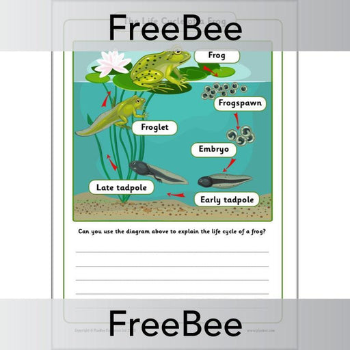 PlanBee Life Cycle of a Frog KS1