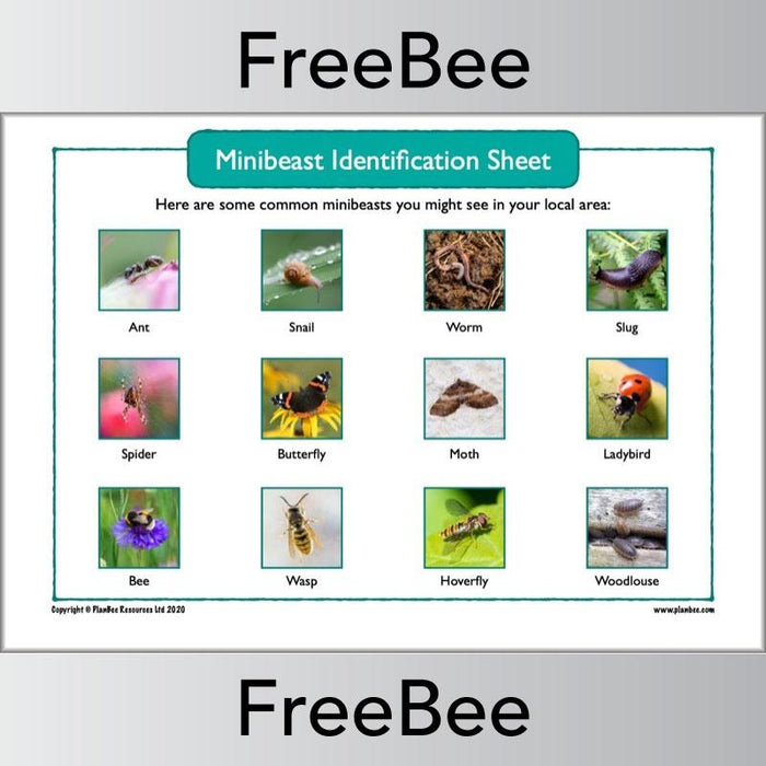 PlanBee Free Minibeast Identification Sheet by PlanBee