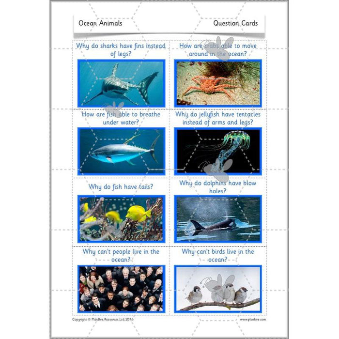 PlanBee FREE Under the Sea KS1 Ocean Animals lesson pack | PlanBee