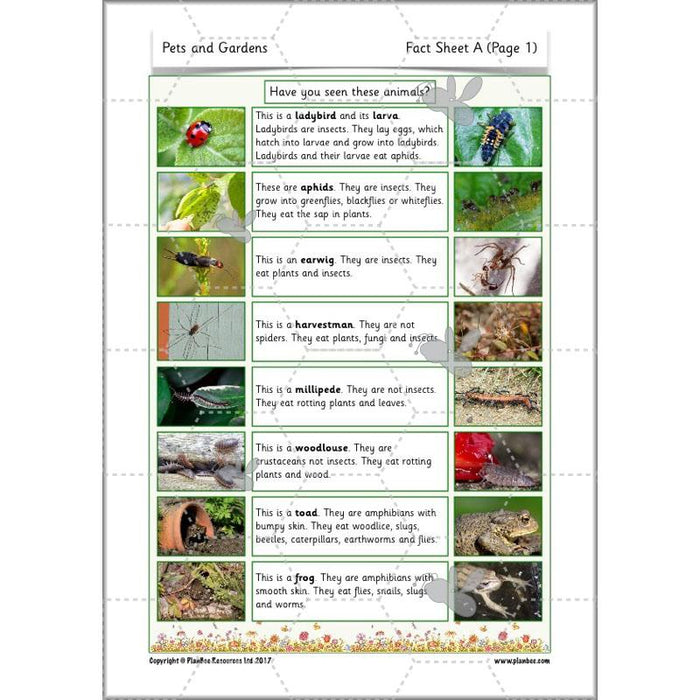 PlanBee Pets and Gardens Year 1 Science Lesson Plans by PlanBee