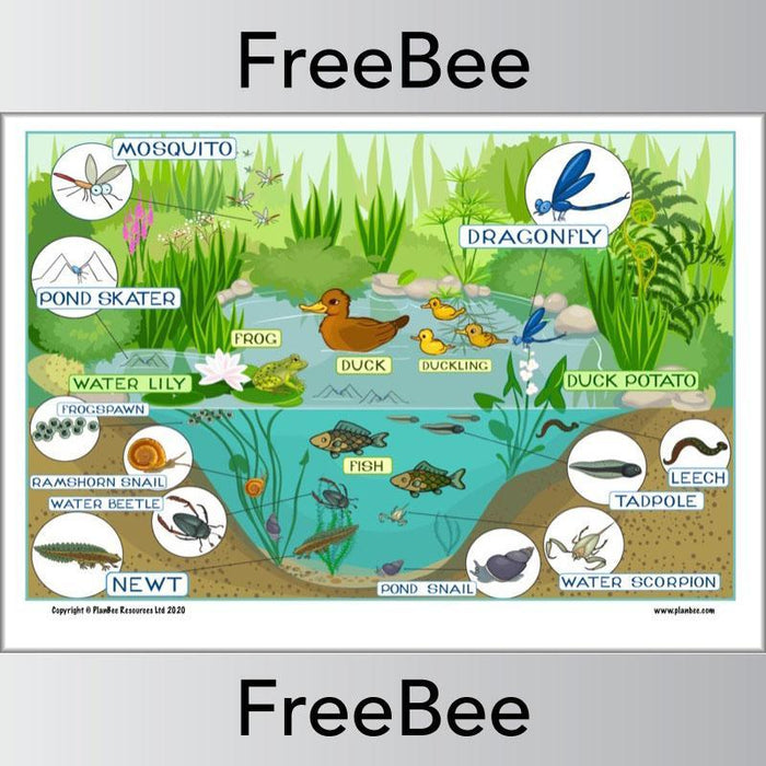 PlanBee Pond Habitat KS1 | Poster and Worksheet
