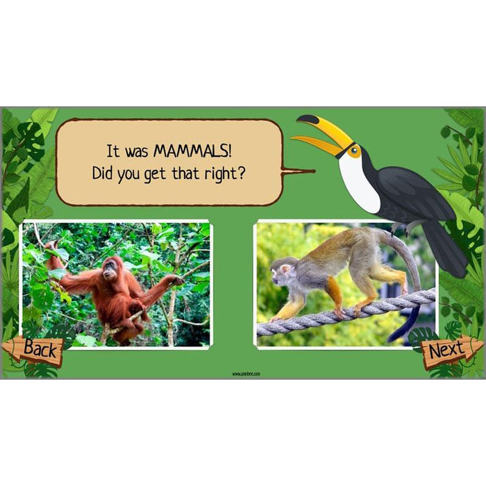The Rainforest Topic