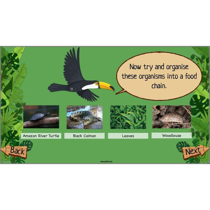 PlanBee Rainforest Topic KS2 Planning and Resources by PlanBee