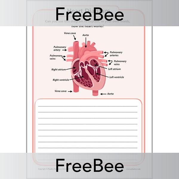 PlanBee FREE Simple Heart Diagram to label by PlanBee