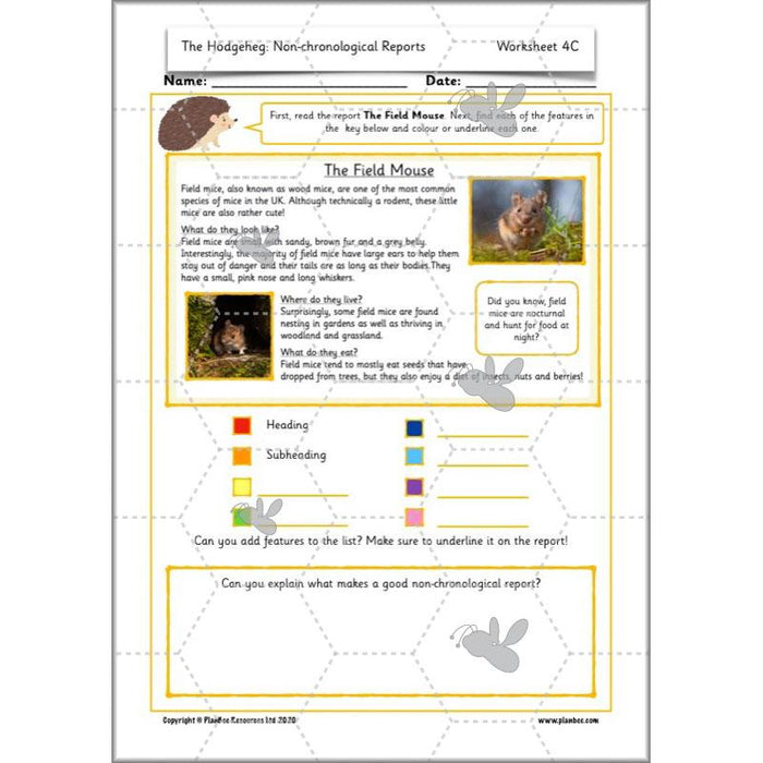 PlanBee The Hodgeheg Non-Chronological Reports Year 2 Planning Pack