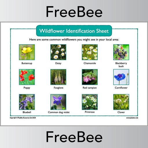 PlanBee Free Wildflower Identification UK Sheet by PlanBee