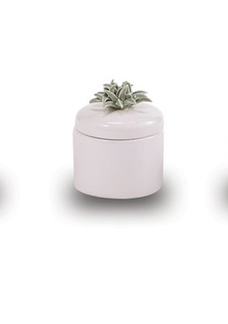 SUCCULENT CANDLE - Molly's! A Chic and Unique Boutique