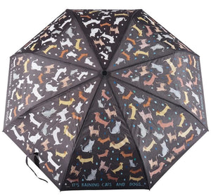 RAINING CATS & DOGS BIG KIDS COLOR CHANGING UMBRELLA - Molly's! A Chic and Unique Boutique