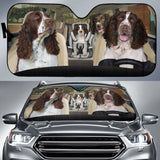 English Springer Sun Shade