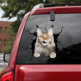 MAINE COON CAT CRACK CAR STICKER CATS LOVER 4