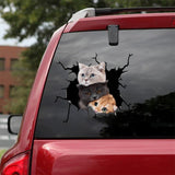 CUTE CATS CRACK CAR STICKER CATS LOVER 1