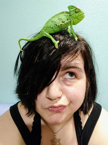 A pet Chameleon on the top of Alexa's  head