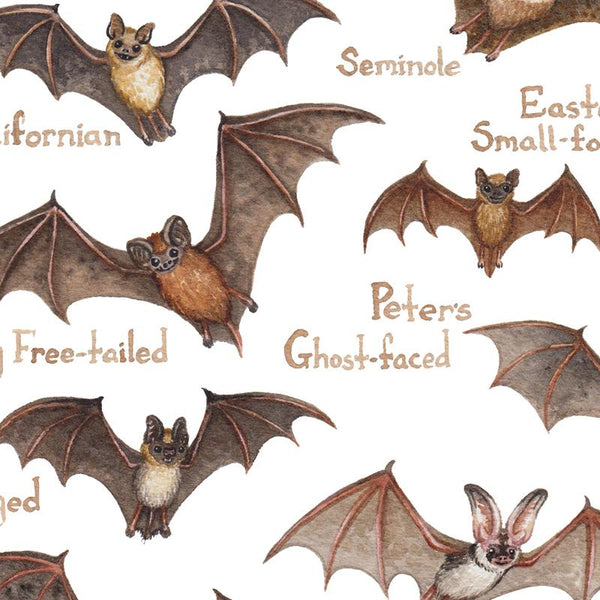 Bats of North America Field Guide Art Print