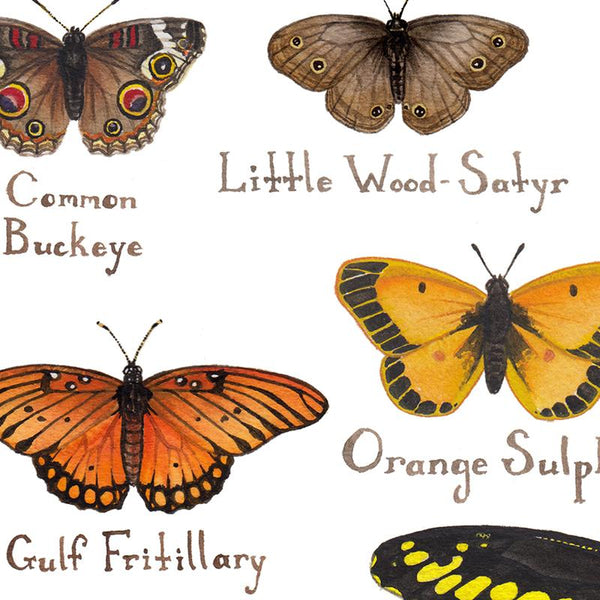 Wholesale Butterflies Field Guide Art Print: Louisiana