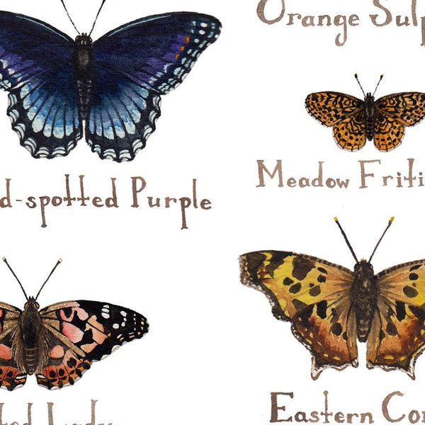 Wholesale Butterflies Field Guide Art Print: Ohio