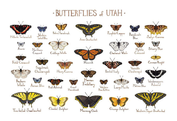 Wholesale Butterflies Field Guide Art Print: Utah