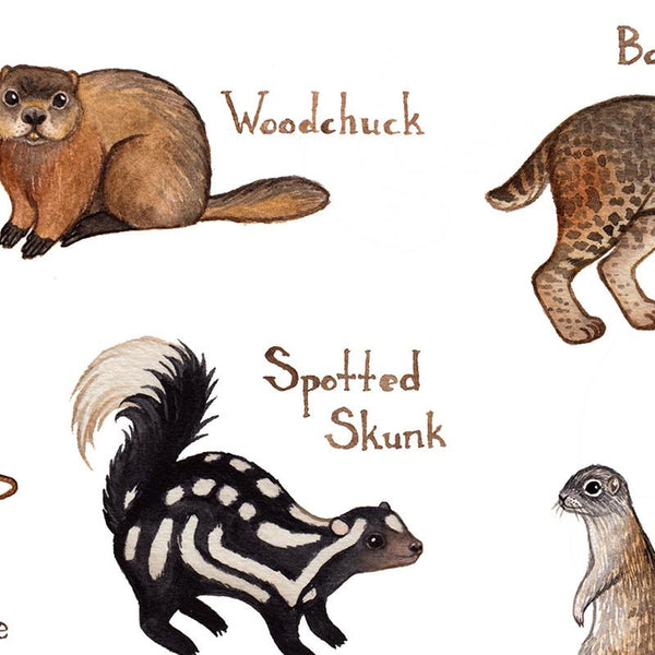 Missouri Mammals Field Guide Art Print