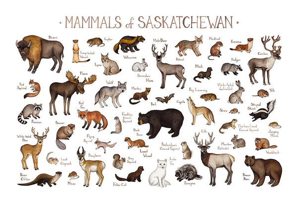 Saskatchewan Mammals Field Guide Art Print