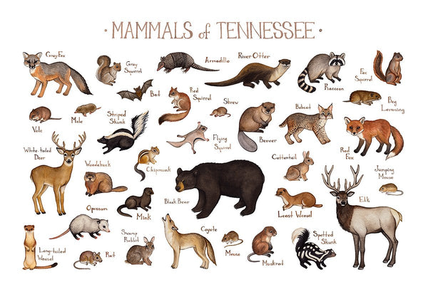 Tennessee Mammals Field Guide Art Print
