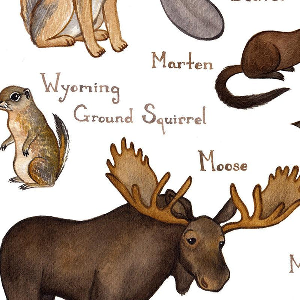 Wyoming Mammals Field Guide Art Print