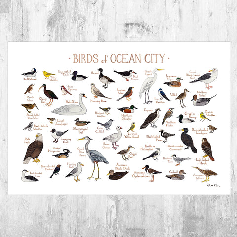 Wholesale Field Guide Art Print: Ocean City Birds