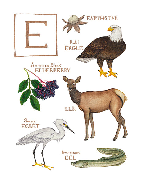 Wholesale Field Guide Art Print: The Letter E