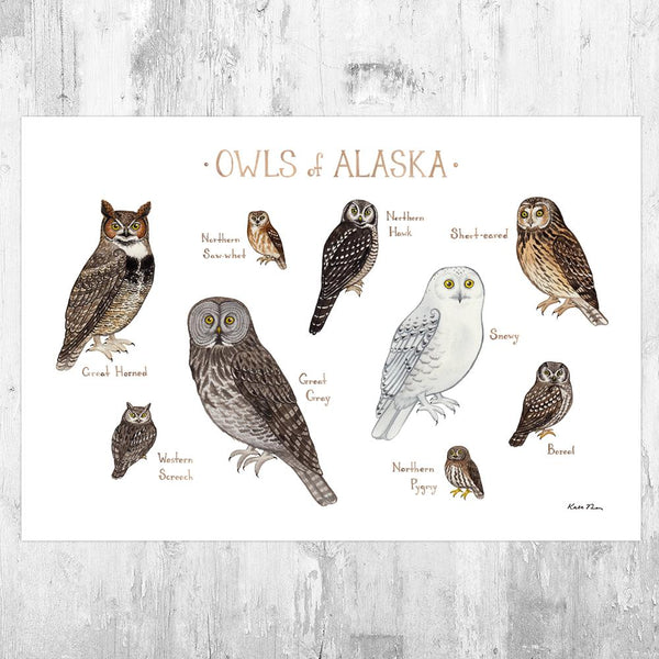 Wholesale Owls Field Guide Art Print: Alaska