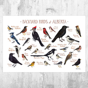 Wholesale Backyard Birds Field Guide Art Print: Alberta