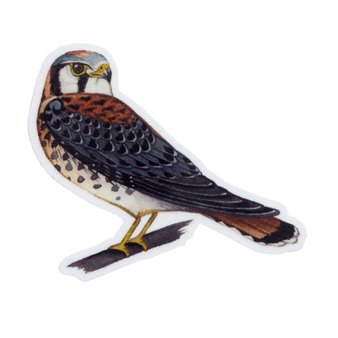 Wholesale Vinyl Sticker: American Kestrel