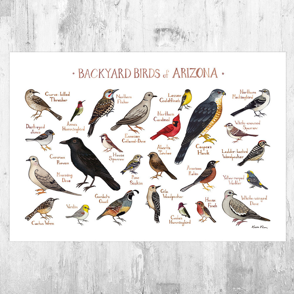 Wholesale Backyard Birds Field Guide Art Print: Arizona