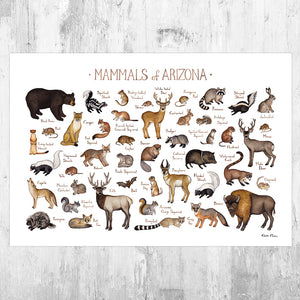 Wholesale Mammals Field Guide Art Print: Arizona