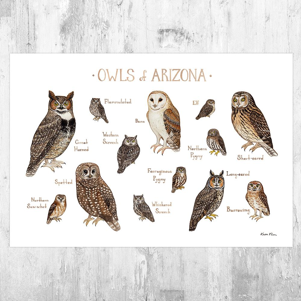 Wholesale Owls Field Guide Art Print: Arizona