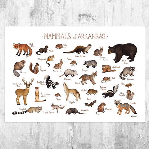 Wholesale Mammals Field Guide Art Print: Arkansas
