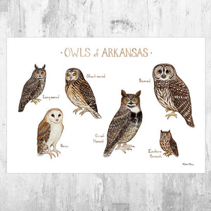 Wholesale Owls Field Guide Art Print: Arkansas