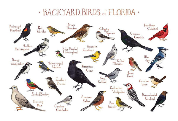 Florida Backyard Birds Field Guide Art Print