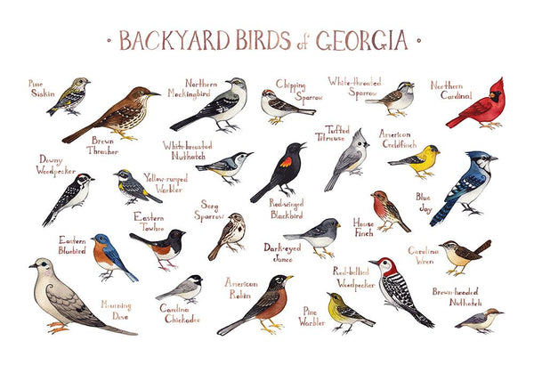 Wholesale Backyard Birds Field Guide Art Print: Georgia