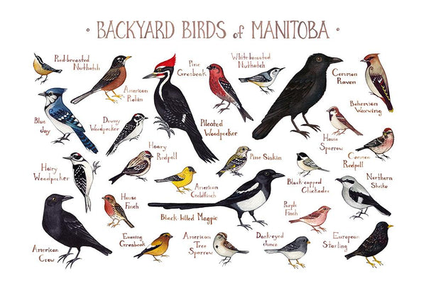 Wholesale Backyard Birds Field Guide Art Print: Manitoba