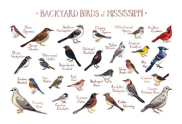 Wholesale Backyard Birds Field Guide Art Print: Mississippi